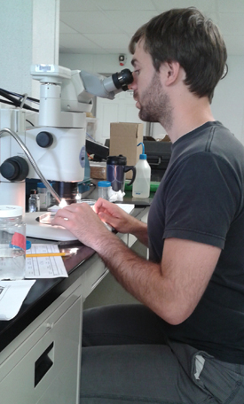 photo of PhD student Thomas van Zuiden examining slides through a microscope